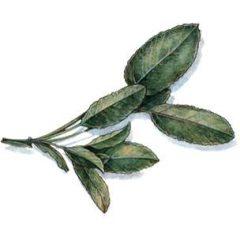 Sheri's Herbs